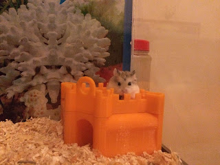 Hamsters in the 3d printed castle