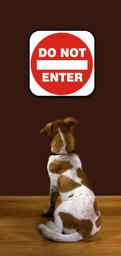 hunde f r allergiker hunde f r allergiker alle rassen im berblick. Black Bedroom Furniture Sets. Home Design Ideas
