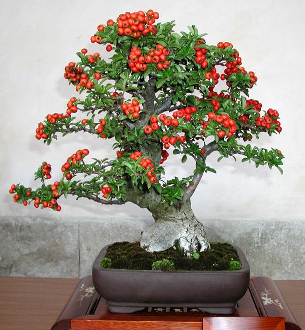 Arte y jardiner a bons is con flor o fruto for Arboles enanos para jardin