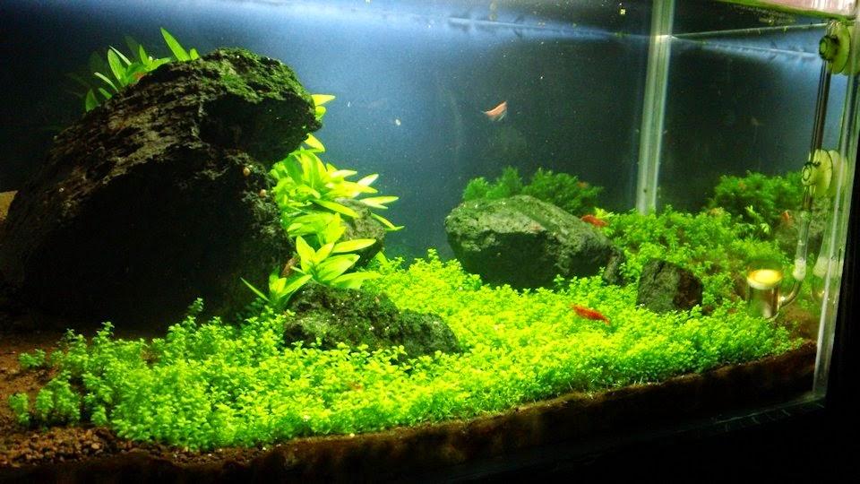 Plantando un acuario paso a nano jdb