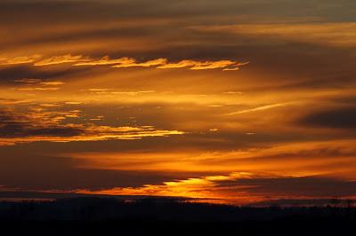 Dawn Wetland