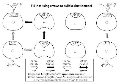 Worksheets atp molecule