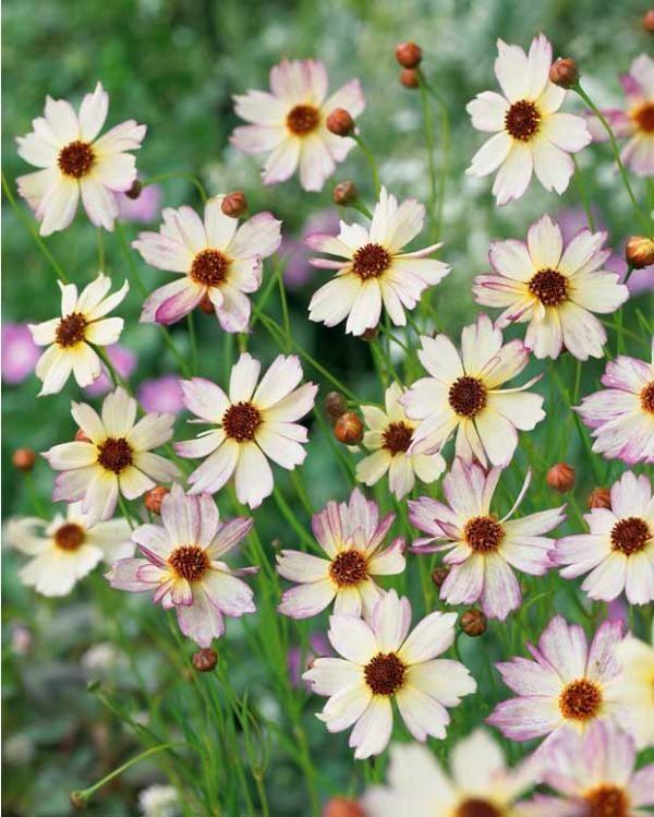 LOVELY FLOWERS: Very Nice Wonderfull Flower High