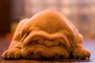 Imagenes de perritos