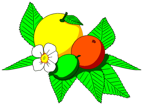 Image: Citrus. Image is in the Public Domain. Source: http://www.wpclipart.com/food/fruit/assorted/assorted_3/citrus.png.html