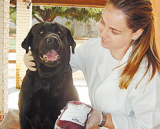 cachorro doando sangue