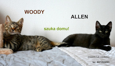 Woody i Allen do adopcji.