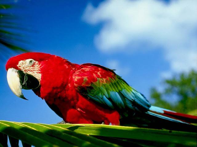 Parrot Birds 2
