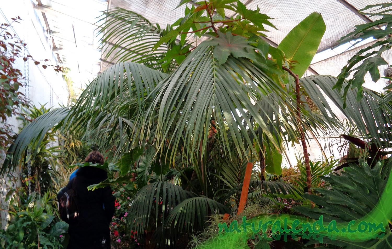 invernadero tropical del retiro