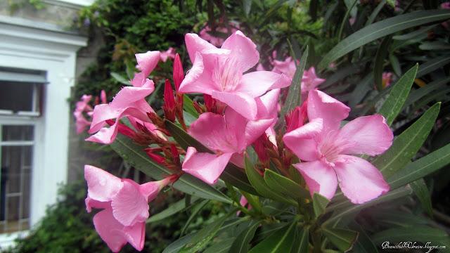 Цветы. Кузнецовский дворец Форос