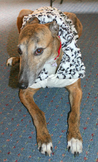 Girly Girl greyhound-my fashion plate