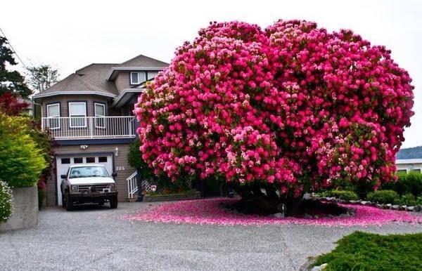Pokok Bunga Depan Rumah
