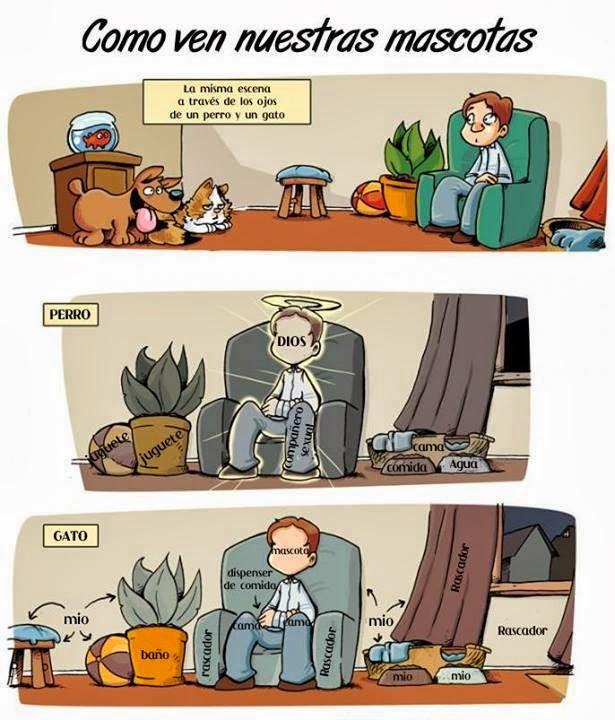 Como ven nuestras mascotas