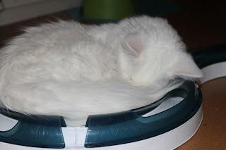 Cat senses aktivointirata+fretti