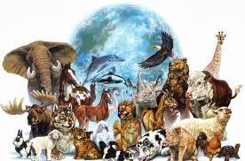 Se o homem pensasse como os animais...