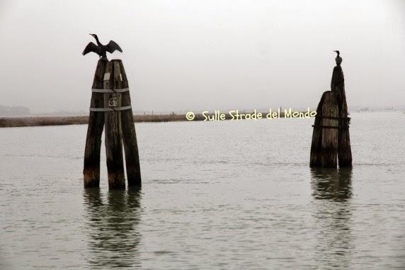 Cormorano in laguna