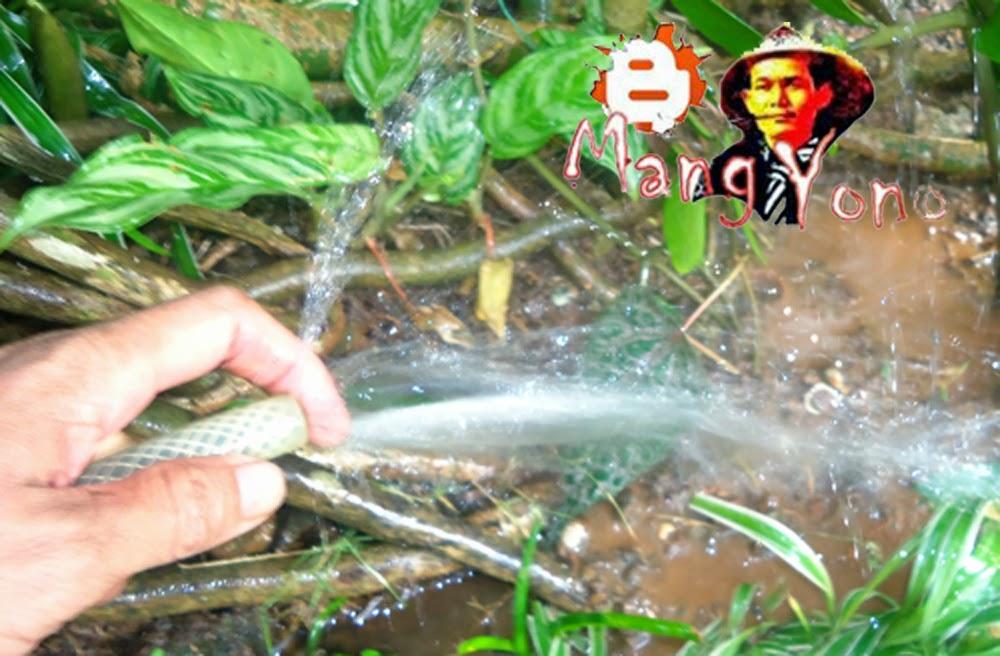 Gambar 5. Melakukan penyiraman setelah perundukan selesai
