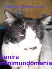 Petrônio,meu amiguinho felino.