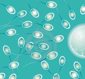 Proses Keluarnya Sperma Dari Penis