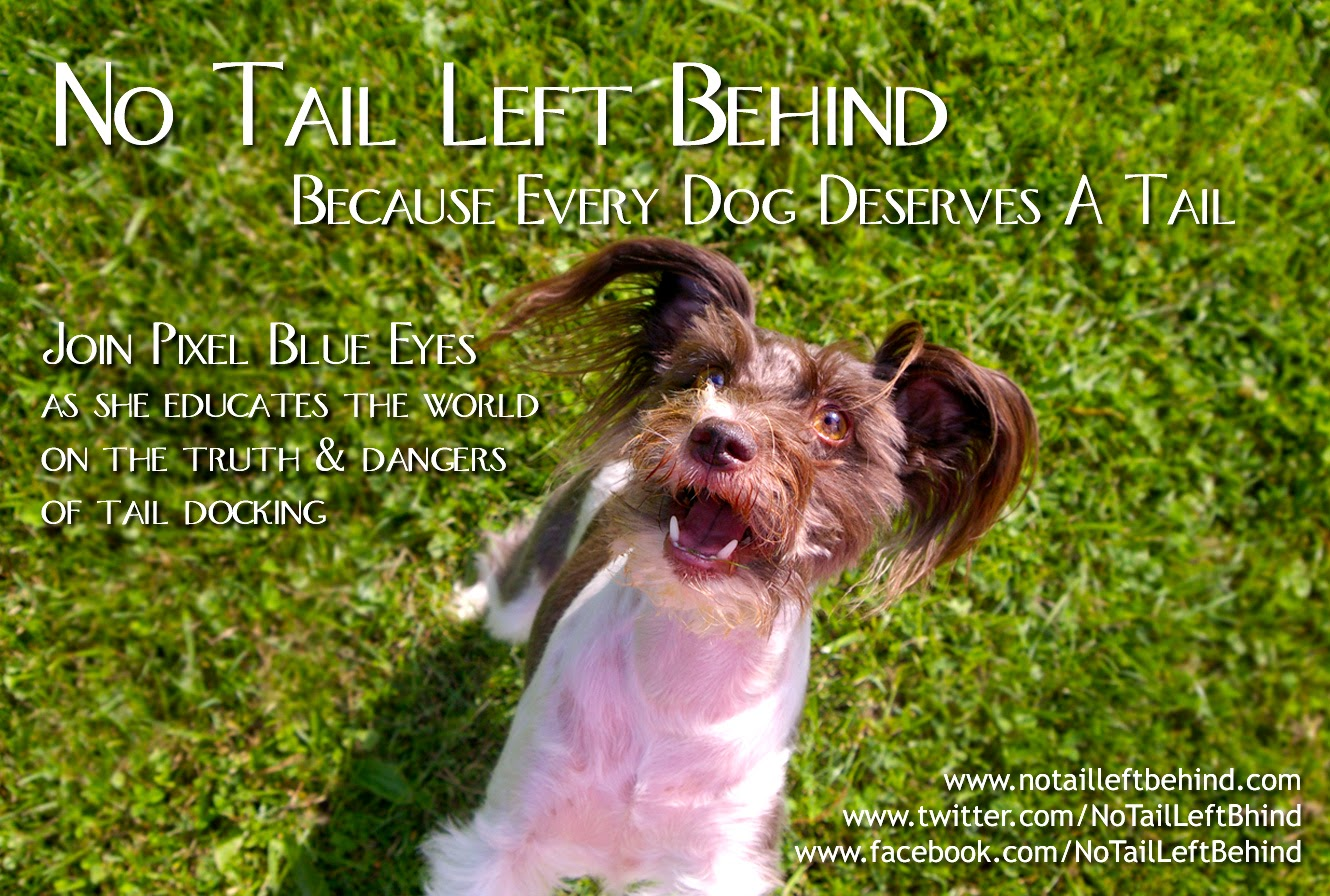 No Tail Left Behind - Because every dog deserves a tail poster with Pixel Blue Eyes -