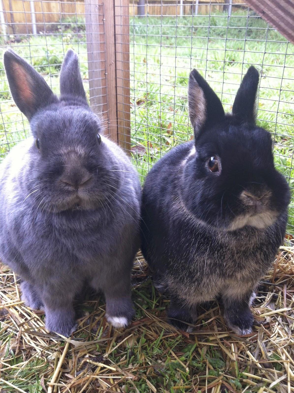 bebe, mr socks, rabbits