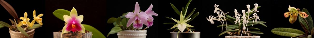 Lome orhideepäevik