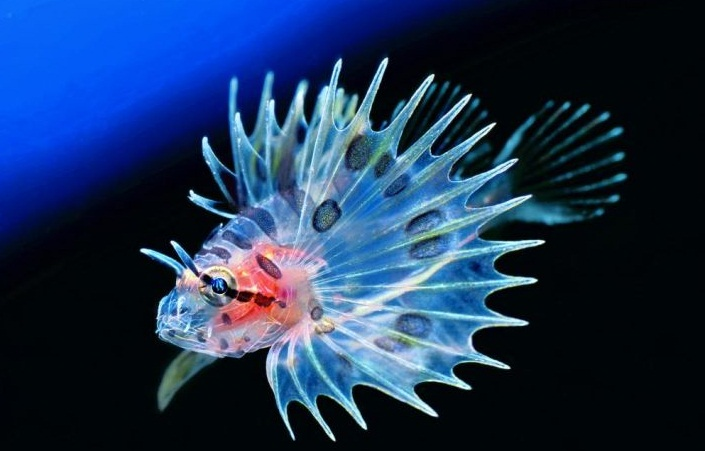 Beautiful Fishes in the World