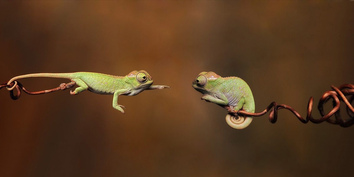 Chameleons 300+ Muhteşem HD Twitter Kapak Fotoğrafları
