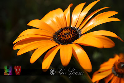 yellow flower, garden festival, garden of five senses