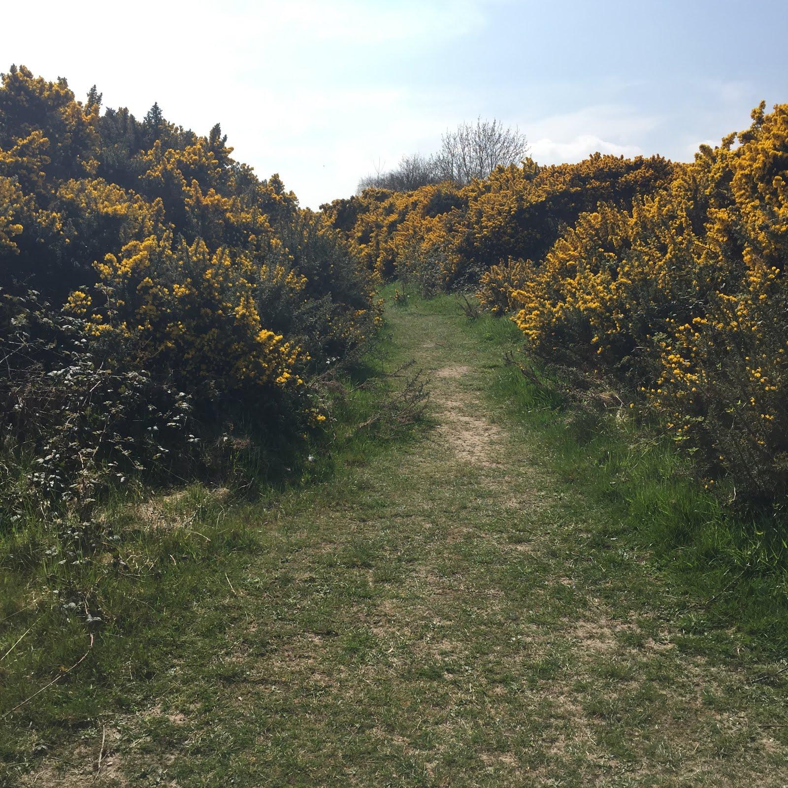 The road we walk