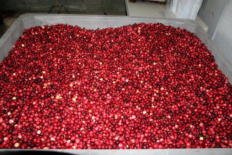 YELLOWPOINT CRANBERRY FARM