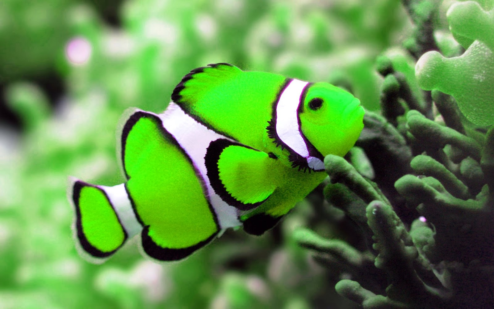 Gambar Gambar Ikan Yang Cantik 47 Foto