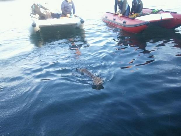 Lawson 39 s landing fishing report january 2012 for Tomales bay fishing report