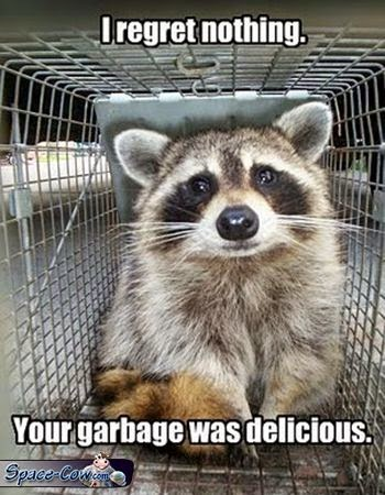 funny animals raccoon picture