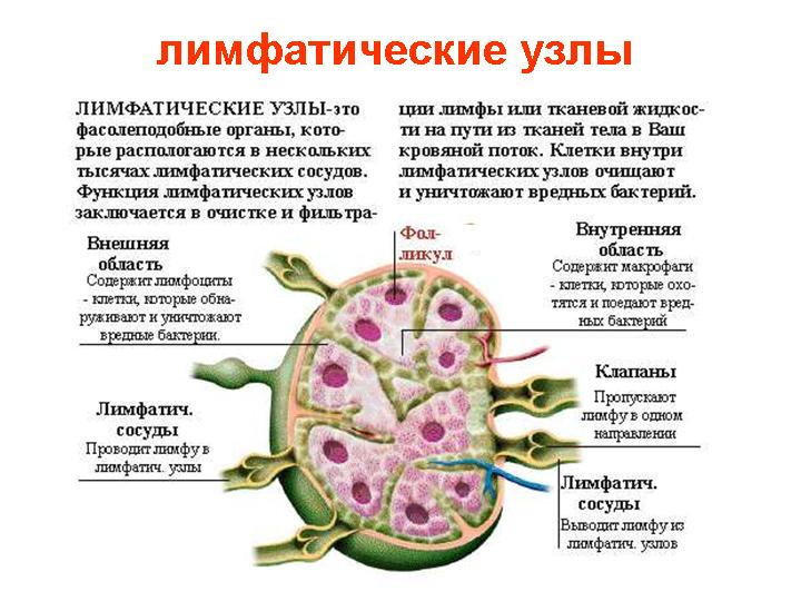 Лимфосистему нельзя греть