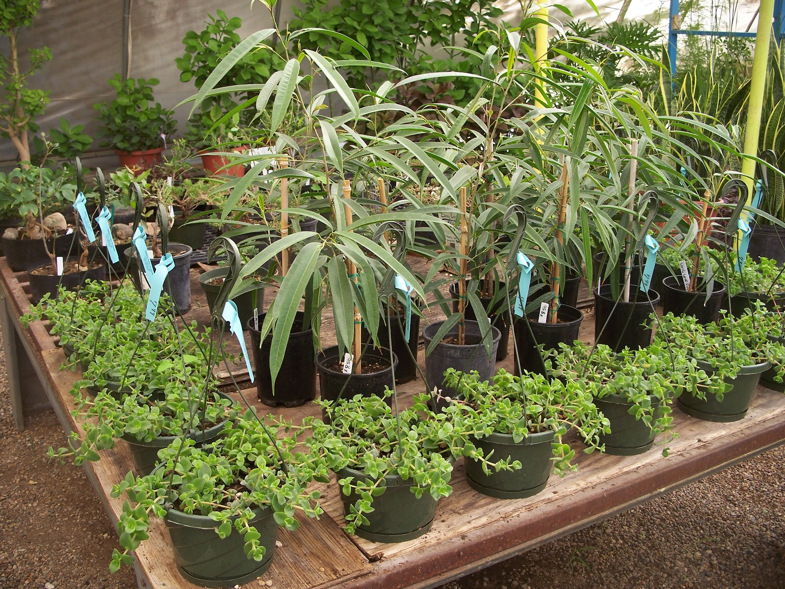 Trees that please nursery house plants for Low water indoor plants