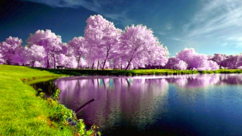 Beautiful Lake View With Grass And Pink Leaves Tree