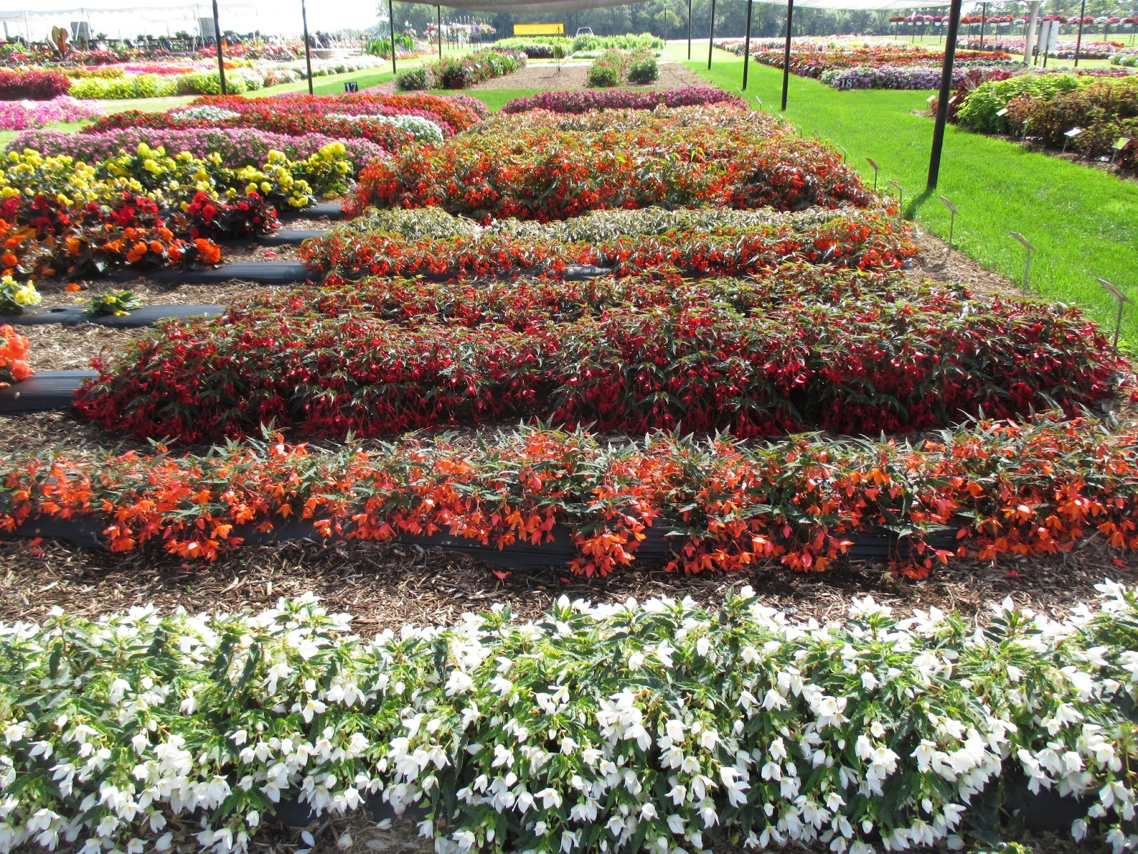 Trifecta of Fun - Rotary Botanical Gardens