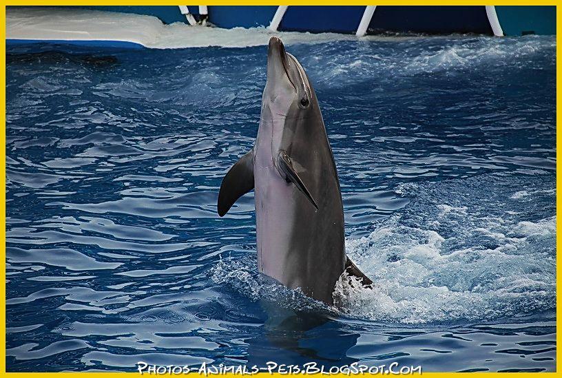 http://1.bp.blogspot.com/-zR0pjOIvQZk/Tt-Ic77Ah9I/AAAAAAAACgo/AEtWhhUnggY/s1600/Dolphin%2Bpictures.jpg