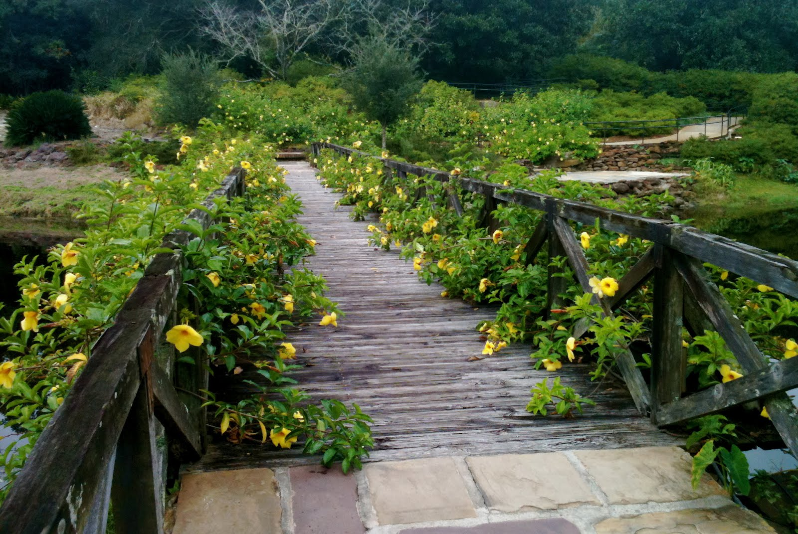 Avid Reader 39 S Musings Wordless Wednesday Bridge At