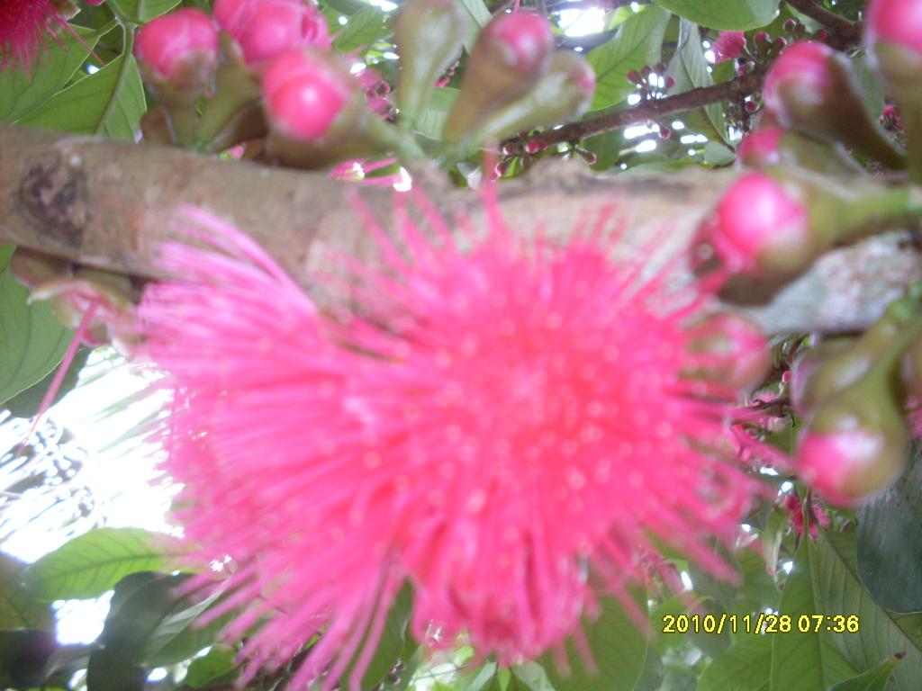 rosas no jardim poema : rosas no jardim poema:No jardim dos meus sonhos