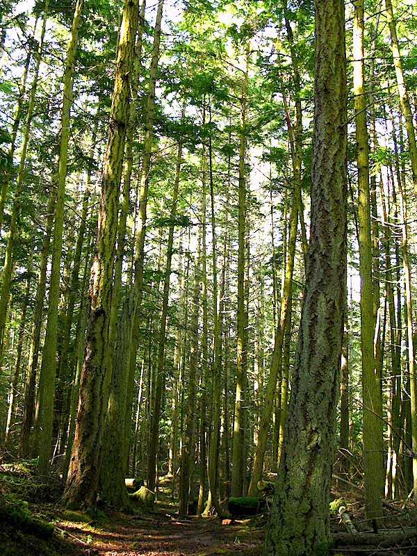 forest at ebey's landing, whidbey island