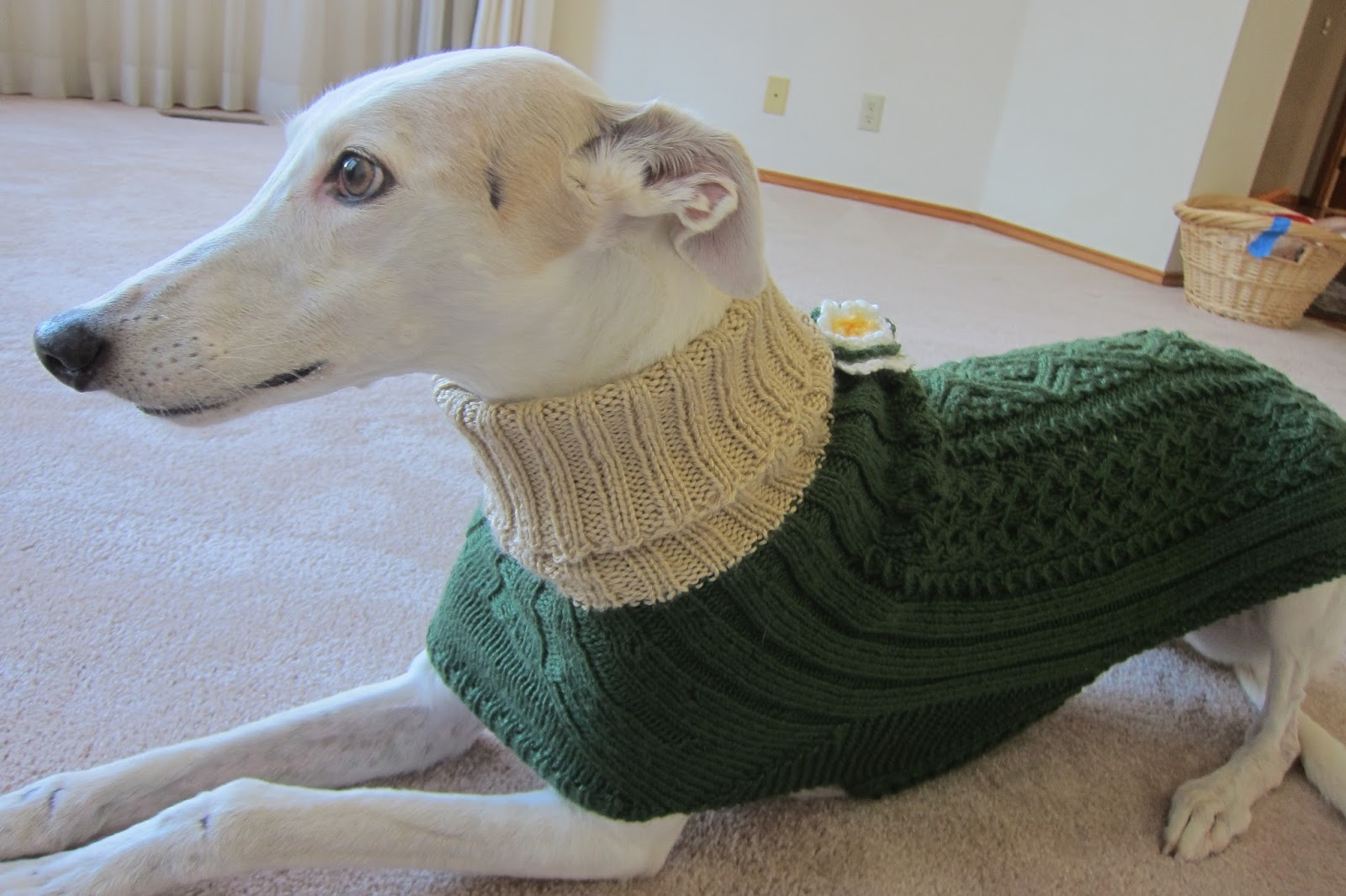Knitting Patterns For Greyhound Sweaters : Greyhound Knit Sweaters: Green coat for a girl dog