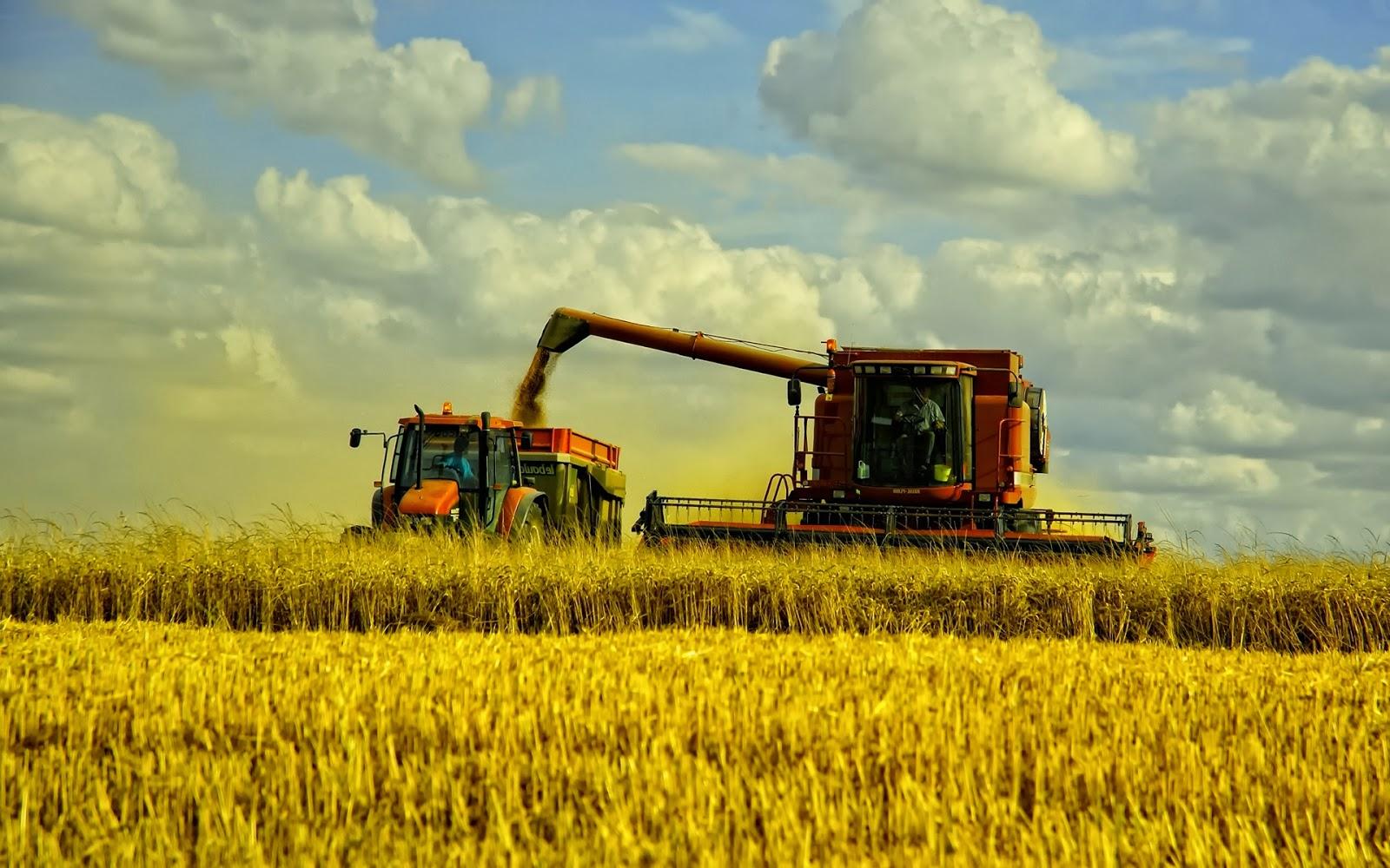 Лукпорей методы посадки семян уход за рассадой сбор