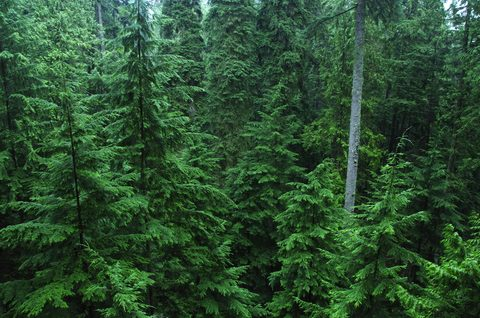 Living Forests