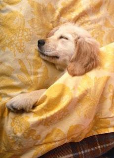Rapid Eye Movement In Dogs