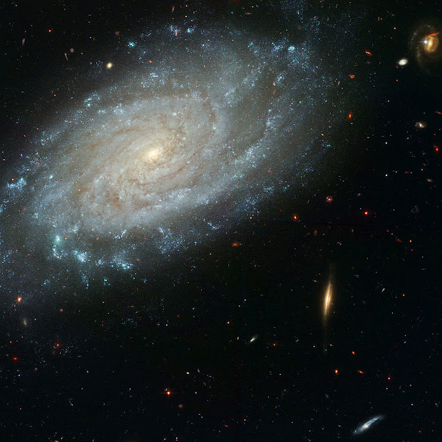 Majestic dusty Spiral Galaxy NGC 3370 as imaged by Hubble