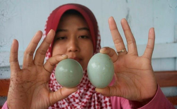 Telur Bebek Bulat Gegerkan Kulonprogo