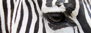 Zebra eye COVER PHOTO FOR FACEBOOK