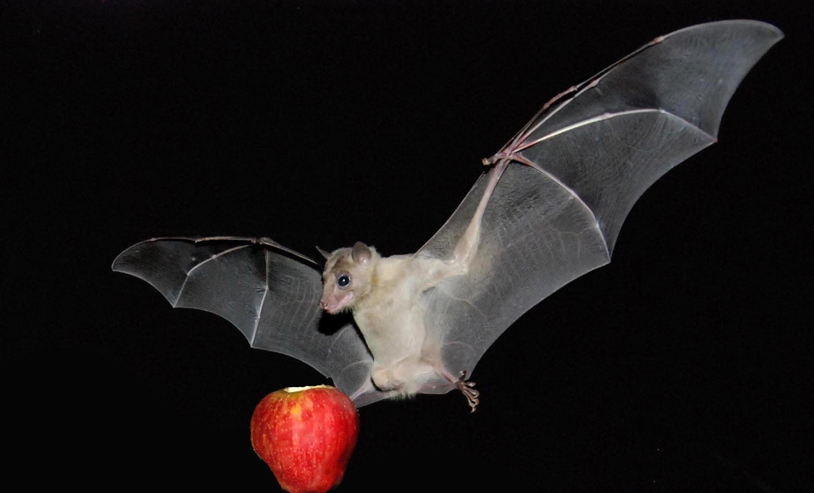 World All Animals: Bats new photos